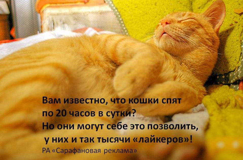 catsslepp
